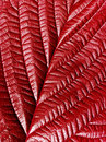 Red leaf. Royalty Free Stock Photo