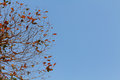 Red leaf on blue sky background Royalty Free Stock Photo