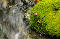 Red leafs resting on moss bright of bright lush green next to a flowing stream Royalty Free Stock Photography