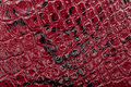 Red leather texture background. Closeup photo. Reptile skin. Royalty Free Stock Photo