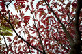 Red leaves. Stock Photography