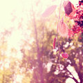 Title: Red Leaves with Blurred Trees Background