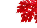 Red leaves border on white background Stock Image