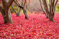 Red Leaves on the Forest Floor Stock Photo