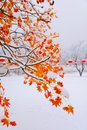 Image : Red leaves in the snow