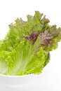 Red lettuce isolated on white background Stock Image