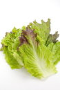 Red lettuce isolated on white background Royalty Free Stock Images