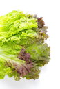 Red lettuce isolated on white background Royalty Free Stock Photo