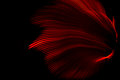 Red Light Wave Royalty Free Stock Photo