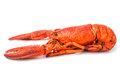 Red lobster on white freshness background Stock Photography