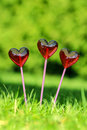 Red lollipops in heart shape on fresh green grass the garde Royalty Free Stock Image