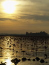 Red lotus lake in the morning scene of udon thani province thailand picture taken with lensbaby Stock Photos