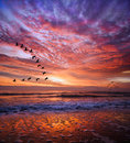Picture : Red magical sunset.BULGARIA beach jetty swimmer