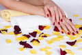 Red manicure and rose petals Royalty Free Stock Photo