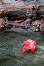 Red maple leaf autumn on a piece of wood Stock Photo