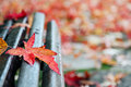 Red maple leaf on a bench Royalty Free Stock Photo