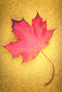 A red maple leaf on golden glitter background Stock Photography