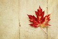 Red maple leaf on a vintage wood background Stock Image