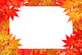 Red maple leave of Colorful autumn with space for text or symbol. Royalty Free Stock Photo