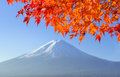 Red maple leave with mt fuji in autumn colors Royalty Free Stock Photo