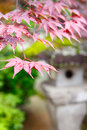 Red maple and traditional temple lantern in Japan