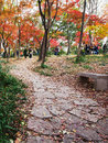 Red maples hill maple trees turn in autumn the garden attracts many tourists Stock Photos