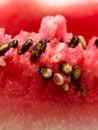 Red melon Stock Photos