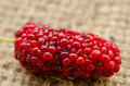 Red mulberry. Royalty Free Stock Photo