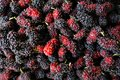 Red mulberry fruit Royalty Free Stock Photo