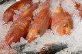 Red mullet on fishmonger's slab Royalty Free Stock Photos