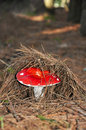 Red mushroom. Royalty Free Stock Photos