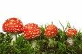 Red mushroom Royalty Free Stock Photo