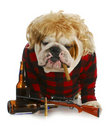 Red-neck dog Royalty Free Stock Image