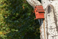 Red nesting box bird on a birch tree summer Stock Photos