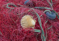 Red nets with shell Royalty Free Stock Photo