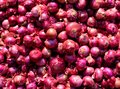 Red onion. Background and texture Royalty Free Stock Photo