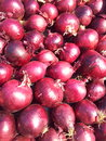 Red onion Royalty Free Stock Photo