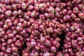 Red onions fresh in thai market Royalty Free Stock Photography
