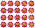 Red open flowers pattern on white backgrounds background Stock Photo