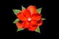 Red Orange Flower With Green L...