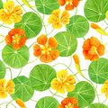 Red, orange, yellow nasturtium flowers and leaves seamless pattern. Hand drawn botanical watercolor illustration with garden