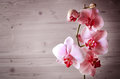 Red Orchid Royalty Free Stock Photo