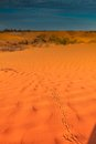 Animal tracks in red sand dune Royalty Free Stock Photo