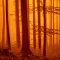 Red over saturated foggy woodland creepy forest color filter filter effect used Royalty Free Stock Photo