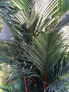 Red Palm From Top Royalty Free Stock Photo