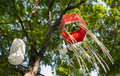 Red paper japanese lantern hang on the tree the is in the wind that blows slowly Royalty Free Stock Photography