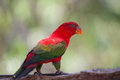 Red parrot beautiful bird on tree Stock Photo