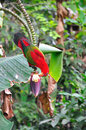Red parrot bird close up Stock Image