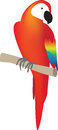 Red parrot south american bird colour illustration on white background Stock Image