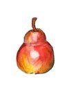 Red pear watercolor image of on white background Stock Image